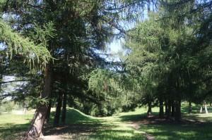 В Битцевском лесу   проведут занятие кружка Лето в Битце