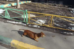 Выставку «Лапы в руки» проведет приют для животных «Бирюлево»