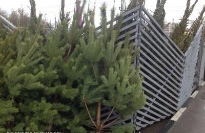 Один из пунктов сбора праздничных елок 15 января будет работать в Южном округе