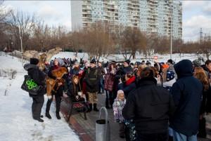 В Покровском парке провели фестиваль «Owl_Fox_DAY»