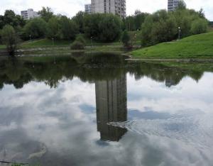 Речная выдра в пруду района Чертаново Южное