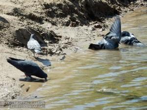 Птицы в пруду Покровского парка в Чертанове Южном