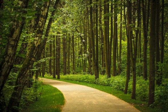 Битцевский лес