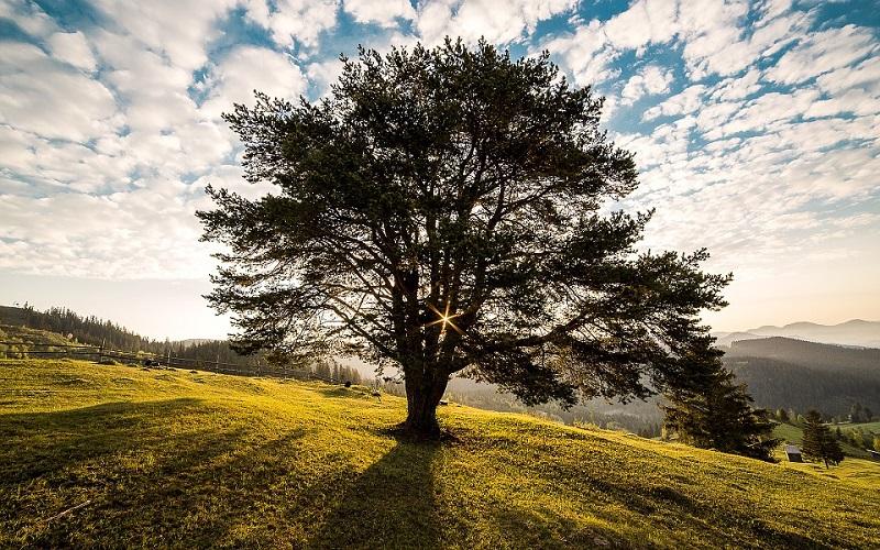пиксабай дерево