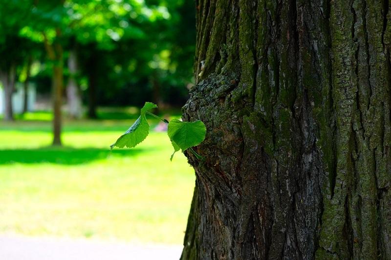 пиксабай дерево лето природа
